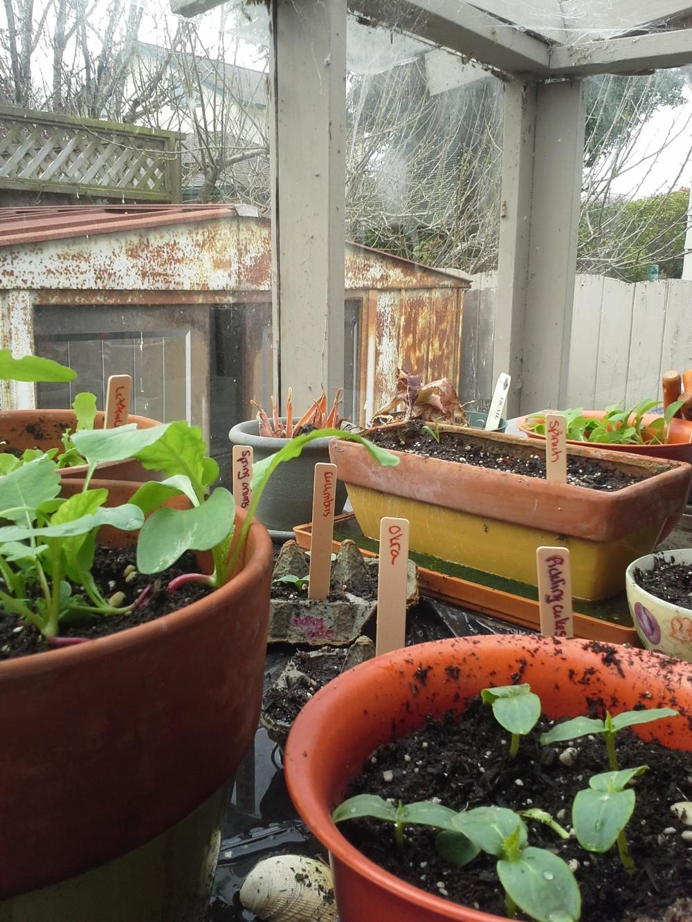 Garden March 4 2