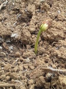 How's my soil?