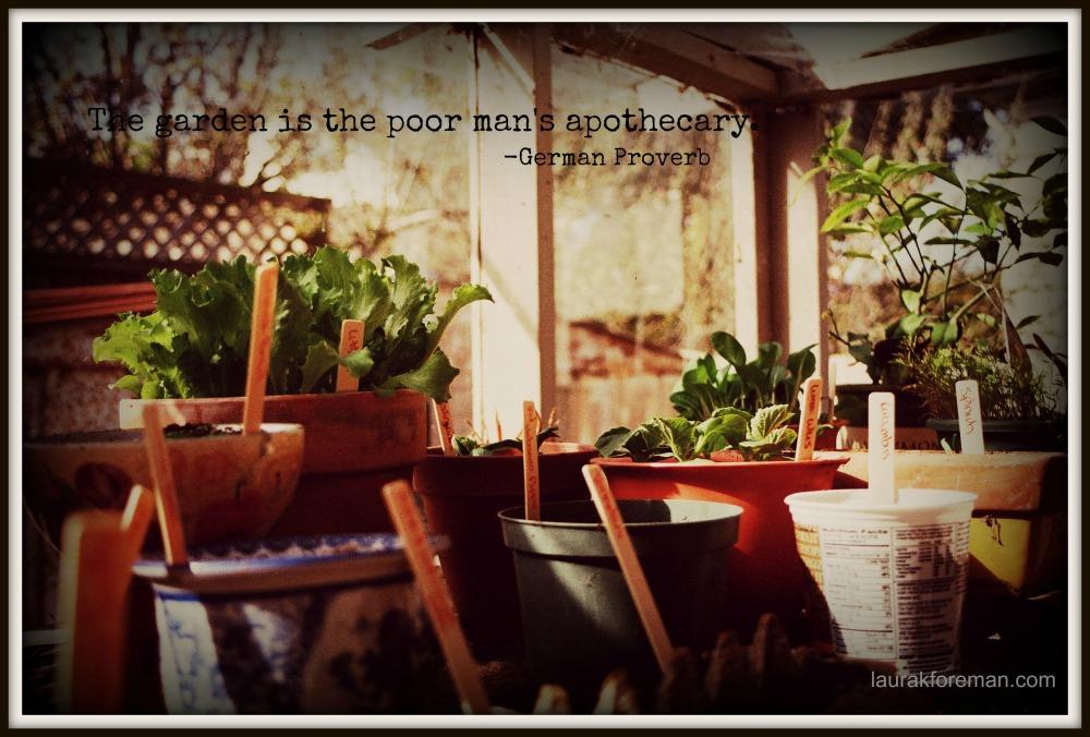 garden inspiration_nature's apothecary