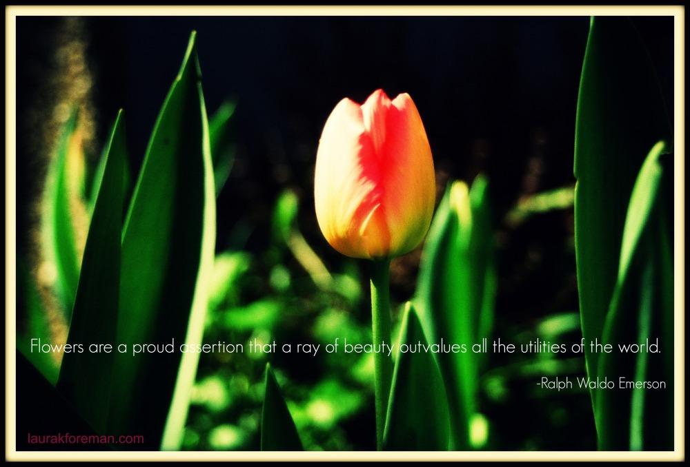 Garden inspiration_tulip