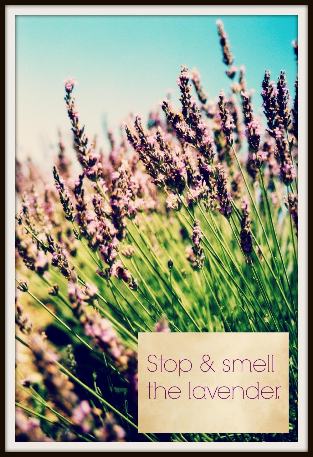 garden inspiration lavender
