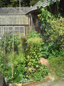 The garden in more verdant times.