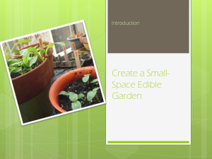 Create a Small Space Edible Garden