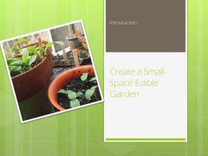 Create a Small Space Edible Garden