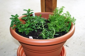herbs in a pot 3_smaller