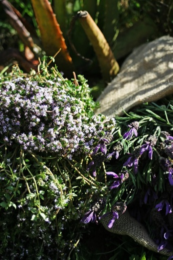 lavender and thyme_smaller