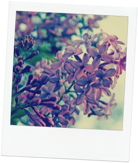 lilac10-for-blog