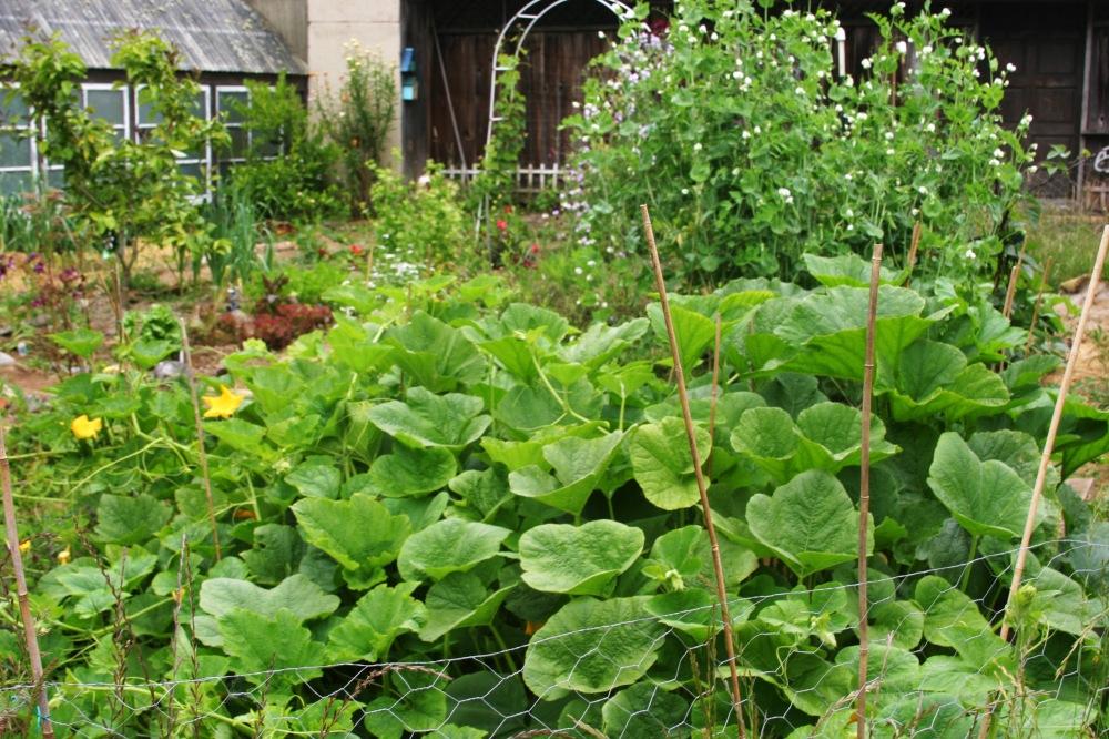 full garden6