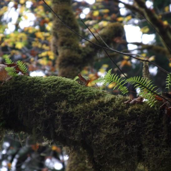 Lichen branch 2